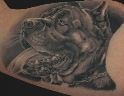 Il Rosso Tattoo  --------------Dog portrait